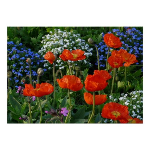 Colourful Flower Bed with red poppies Poster