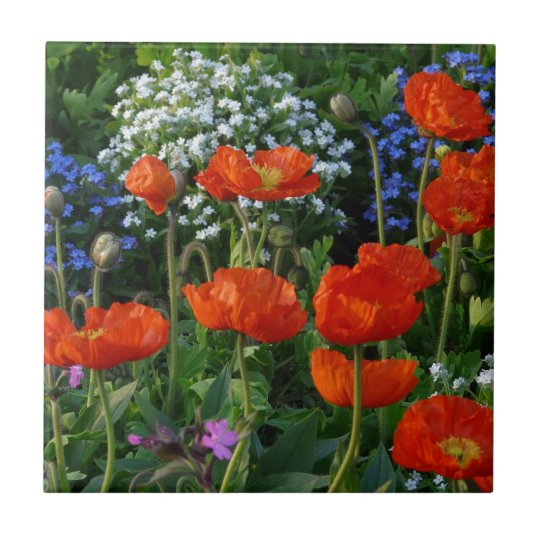 Colourful Flower Bed with red poppies Tile