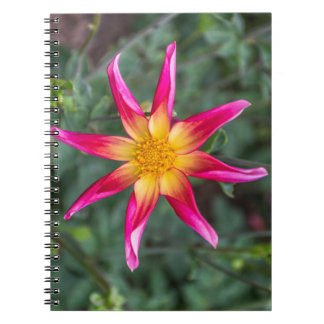 Colourful flower notebook