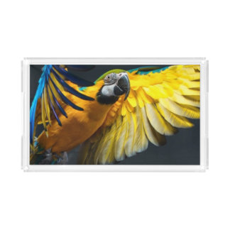 Colourful flying Ara on a dark background Acrylic Tray