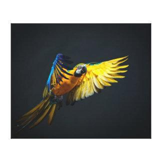 Colourful flying Ara on a dark background Canvas Print