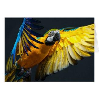 Colourful flying Ara on a dark background Card