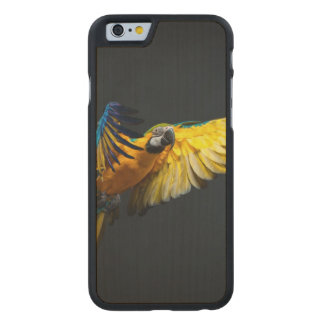 Colourful flying Ara on a dark background Carved Maple iPhone 6 Case