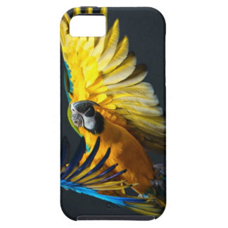 Colourful flying Ara on a dark background iPhone 5 Cases