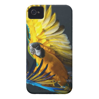 Colourful flying Ara on a dark background iPhone 4 Cases