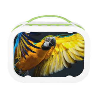Colourful flying Ara on a dark background Lunchboxes