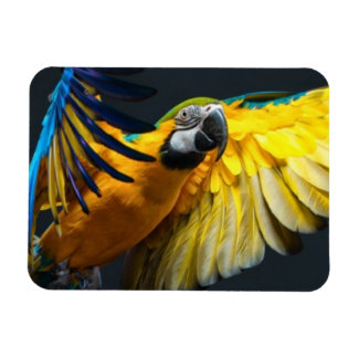Colourful flying Ara on a dark background Magnet