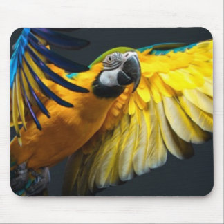Colourful flying Ara on a dark background Mouse Mat