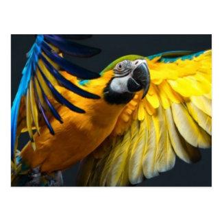 Colourful flying Ara on a dark background Postcard