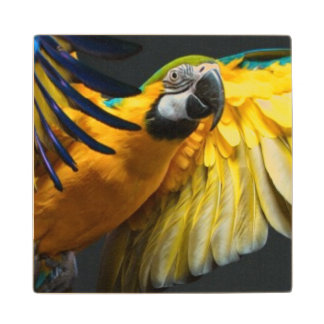 Colourful flying Ara on a dark background Wood Coaster