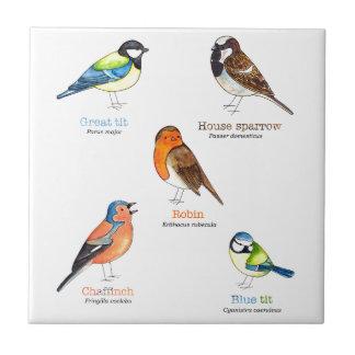 Colourful garden birds small square tile