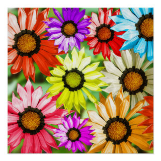 Colourful gerbera flower floral design poster