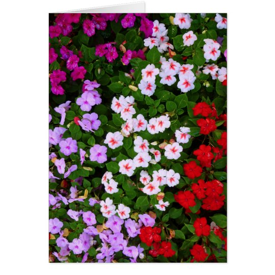 Colourful Impatiens Card