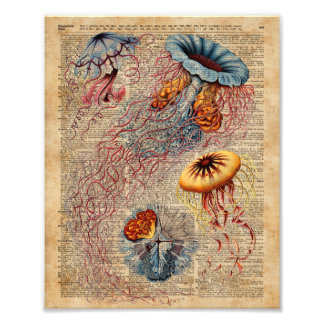 Colourful Jellyfish Sea Life Vintage Old Book Page Photo Print