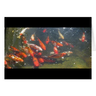 Colourful Koi Fish In a Pond Card