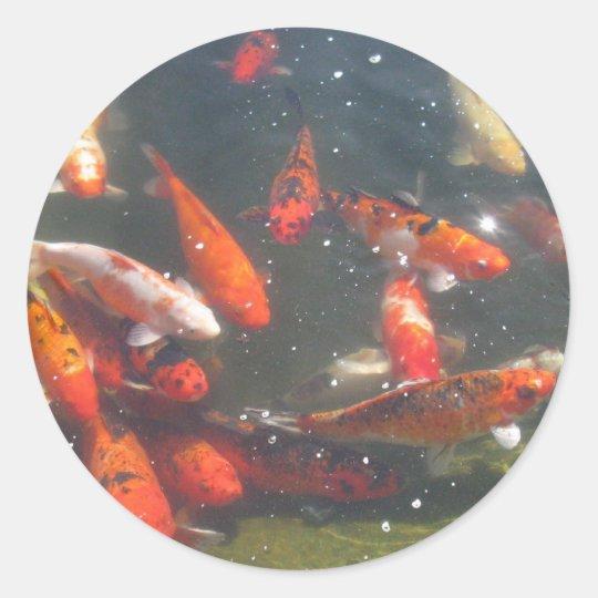 Colourful Koi Fish In a Pond Classic Round Sticker