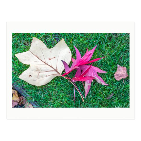 Colourful leaves in autumn postcard