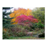 Colourful Leaves Postcards