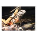 Colourful Orange and White Lizard on a rock Custom Invite