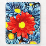 Colourful Orange Red Blue Gerber Daisies Flowers