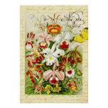 Colourful Orchids and yellow butterfly Poster