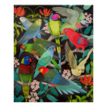 Colourful Parrots and Parakeets Poster