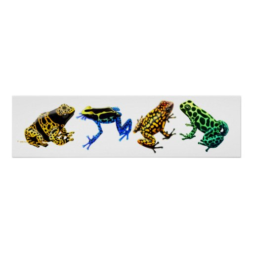 Colourful Poison Frogs Print