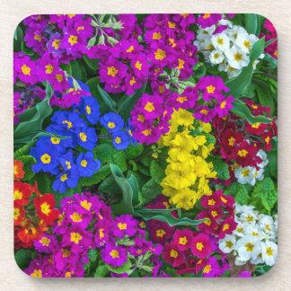 Colourful primroses hard plastic coasters