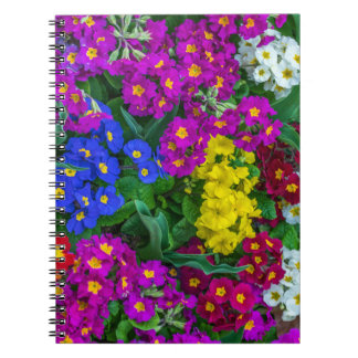 Colourful primroses notebook