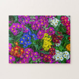 Colourful primroses photo puzzle