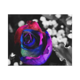 Colourful Rainbow Rose Canvas Prints