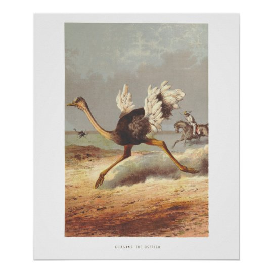 Colourful running ostrich illustration print
