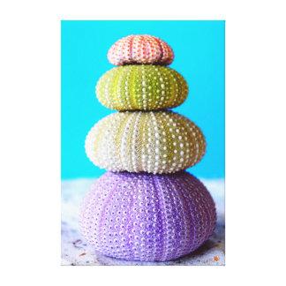 Colourful Sea Urchins Canvas Print