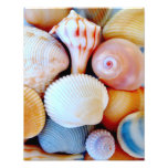 Colourful Seashell Collection Photo