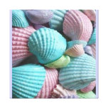 colourful seashells stretched canvas prints