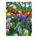 Colourful spring flower garden