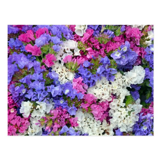 Colourful spring flowers postcard