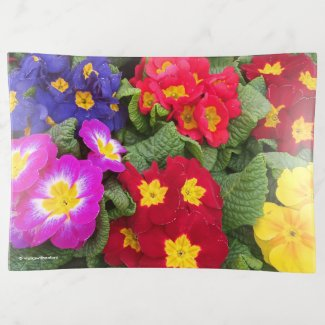 Colourful Springtime Medley of Primulas Trinket Trays