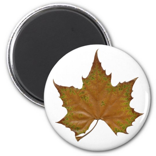 colourful sycamore leaf magnet