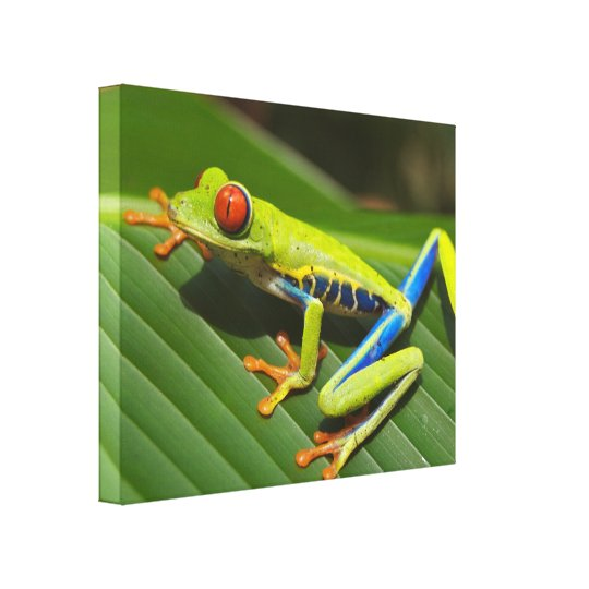 Colourful Tree Frog Canvas Print