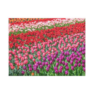 Colourful tulips canvas print