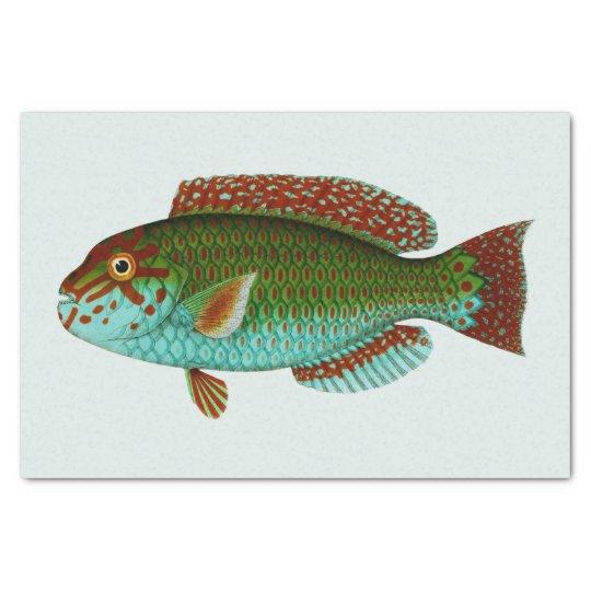 Colourful Vintage Fish Tissue Paper