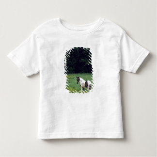 Colt grazing in a pasture with yellow flowers. toddler T-Shirt