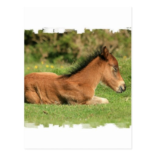 Colt Resting in Grass Postcard
