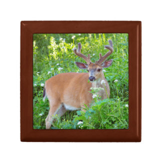 Columbia Black-tailed deer Gift Box