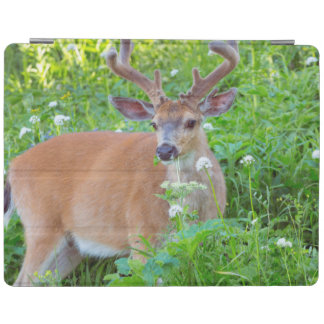 Columbia Black-tailed deer iPad Cover