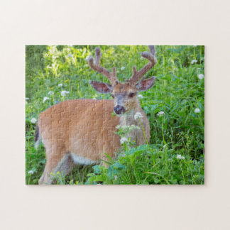 Columbia Black-tailed deer Puzzle