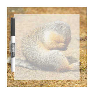 Columbia Ground Squirrel Dry Erase Board