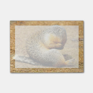 Columbia Ground Squirrel Post-it Notes