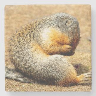 Columbia Ground Squirrel Stone Coaster